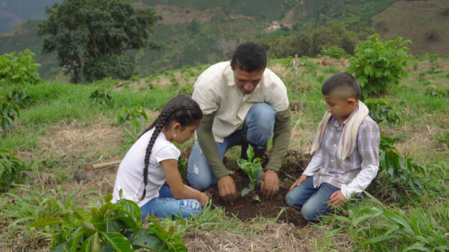 father, daughter and son planting a coffee plant - lavoratore agricolo video stock e b–roll