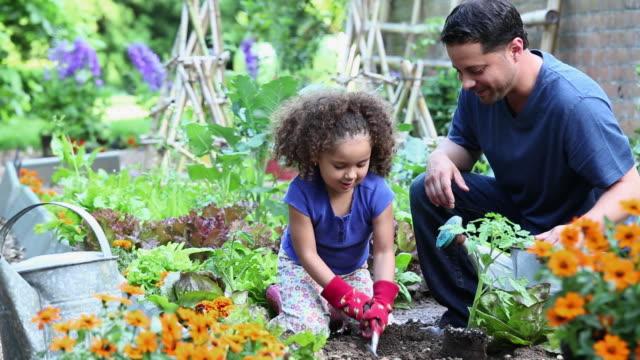 vídeos de stock, filmes e b-roll de ws ds father helping young daughter plant tomatoes in home vegetable garden / richmond, virginia, usa - vegetable garden