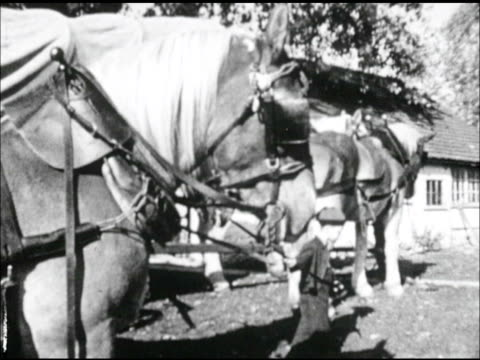 father, male & son, boy hitching team of horse to wagon. - westward expansion stock videos & royalty-free footage