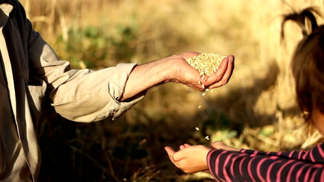 stockvideo's en b-roll-footage met slo mo vader gieten graan maïs in kind hand - midden oosterse etniciteit