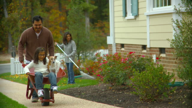 ms, pan, father pushing daughter (6-7) and jack russell terrier in wheelbarrow, mother raking leaves in background, richmond, virginia, usa - jack russell terrier stock videos & royalty-free footage