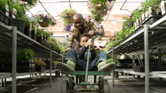 father pushing his son on a cart in a greenhouse - whidbey island shop stock videos and b-roll footage