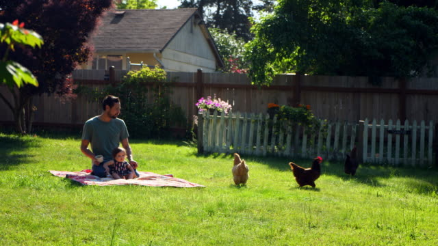ms father sitting on blanket with infant daughter in backyard on summer morning - hen stock videos & royalty-free footage