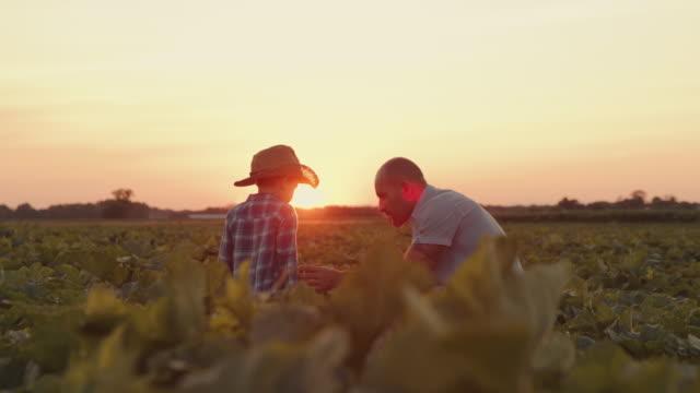 vídeos y material grabado en eventos de stock de slo mo padre enseña a su hijo trabajo agrícola - actividad de agricultura