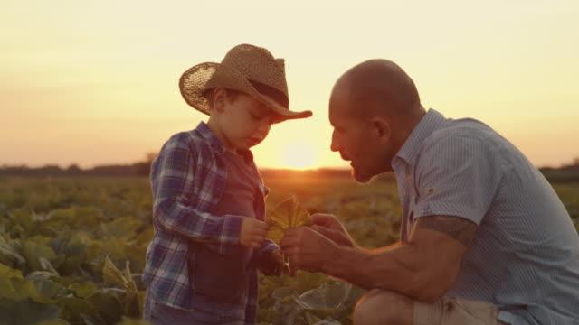 vídeos y material grabado en eventos de stock de slo mo padre enseña a su hijo agricultura - actividad de agricultura