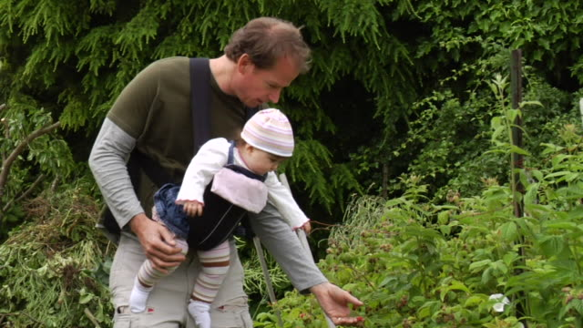 vídeos y material grabado en eventos de stock de ms father walking through garden and picking berries with baby daughter in pack on chest/ vancouver, bc - kelly mason videos
