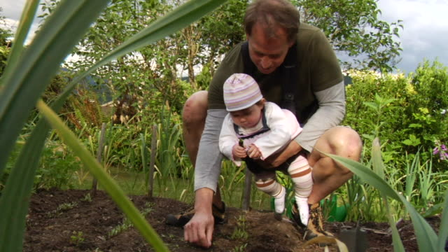 vídeos de stock, filmes e b-roll de ms father with daughter in pack on chest crouching in organic garden and checking on plants/ vancouver, bc - kelly mason videos