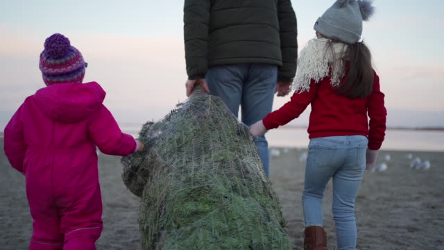father with two daughters dragging a christmas tree on the beach - dragging stock videos & royalty-free footage