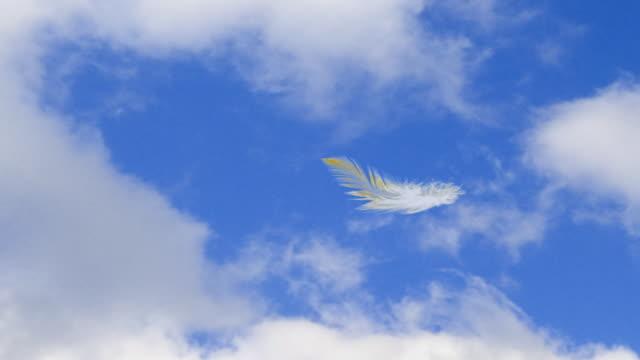 vídeos y material grabado en eventos de stock de falling 3d de pluma - pluma de ave