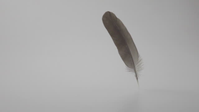 feather falling onto white floor. - animal wing stock videos & royalty-free footage