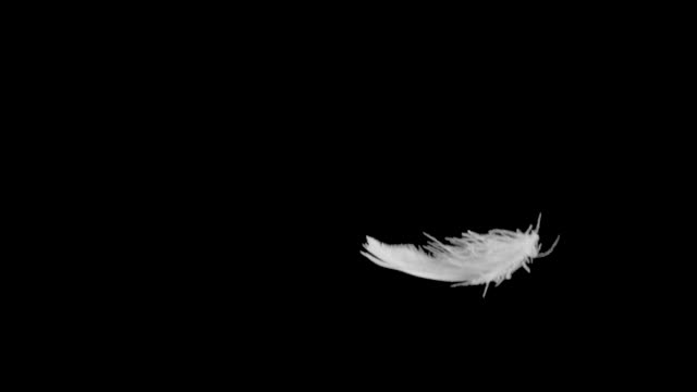feather falling slow motion close up. - feather stock videos & royalty-free footage