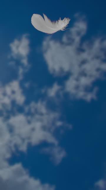 vídeos de stock e filmes b-roll de feather flying in the sky. - lightweight