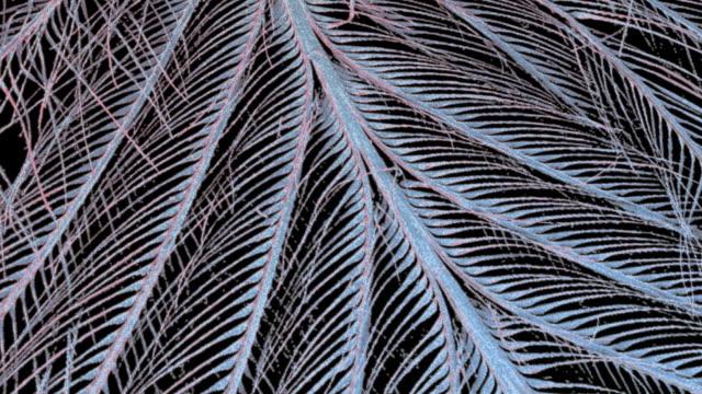 """""""feather, sem"""" - micrografia elettronica a scansione video stock e b–roll"""