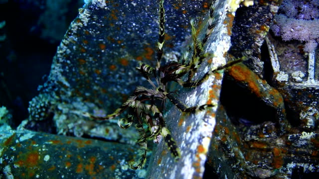 feather star - feather stock videos and b-roll footage