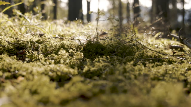 Feathers fall on moss, slow motion