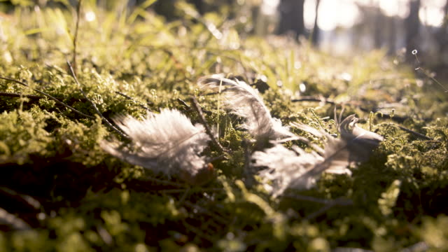Feathers on moss, slow motion