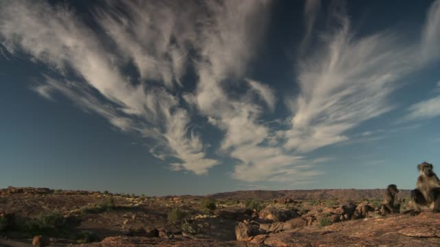 feathery cirrus clouds fill the sky above a troop of baboons as they sit on a rocky hilltop. available in hd. - meteorology stock videos & royalty-free footage