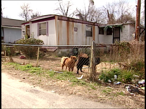 february 1 2004 zo dogs in yard of a trailer home in south carolina neighborhood / united states - south america stock videos & royalty-free footage