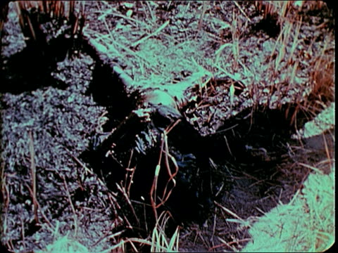 february 1969 ws army and montagnard soldiers in the field / pleiku south vietnam - south vietnam stock videos and b-roll footage