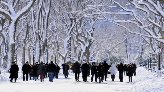 february 2013 winter storm, central park, new york city, manhattan, usa february 2013 winter storm, central park on february 09, 2013 in new york... - 2013 stock videos & royalty-free footage