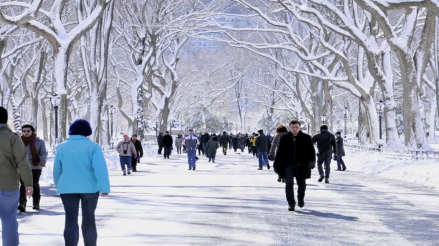 vídeos y material grabado en eventos de stock de february 2013 winter storm, central park, new york city, manhattan, usa february 2013 winter storm, central park, nyc on february 09, 2013 in new... - 2013