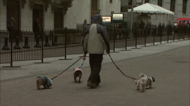 february 23, 2010 montage dog walking outside of new york stock exchange building / new york city, new york, united states - 犬の綱点の映像素材/bロール