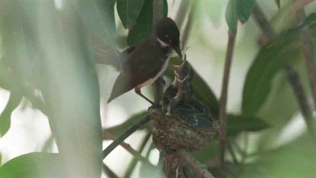 feed baby bird slow motion - pleading stock videos & royalty-free footage
