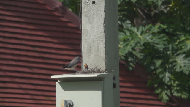 Feed Baby Bird Slow Motion