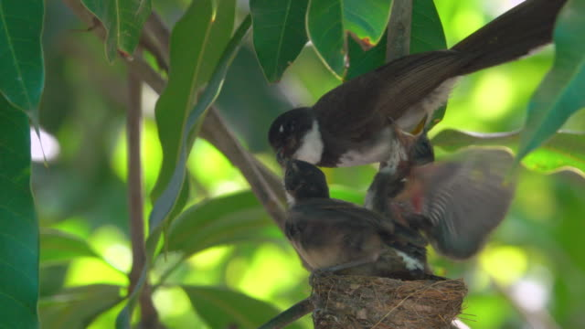 feed baby bird - bird's nest stock videos & royalty-free footage