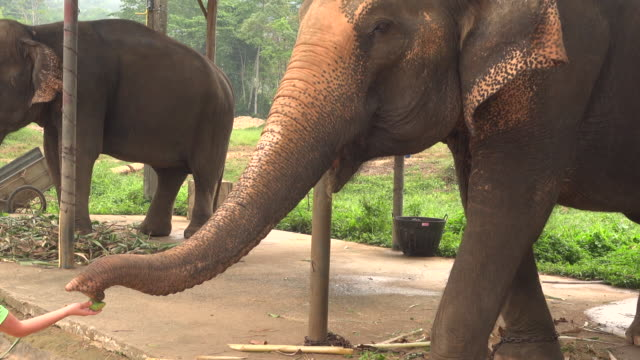 feed elephant - trat province stock videos and b-roll footage