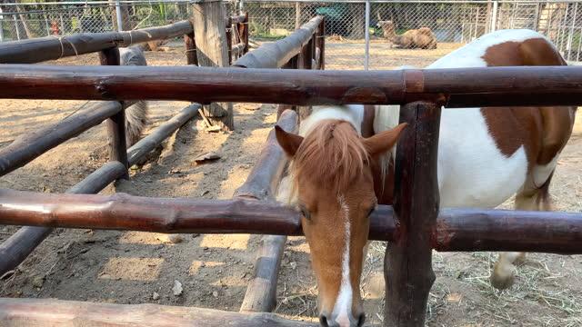 茶色の馬、動物の屋外の餌と世話 - 突き出た鼻点の映像素材/bロール