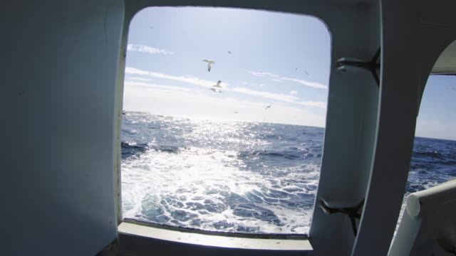 pov feeding birds: feeding frenzy and dives - animal behavior stock videos & royalty-free footage
