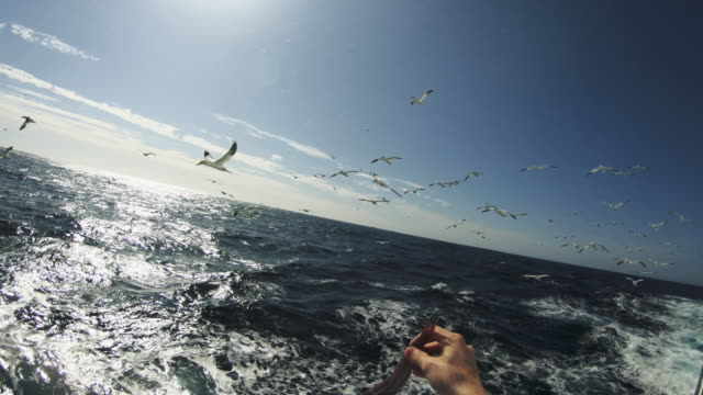 POV feeding birds: feeding frenzy and dives