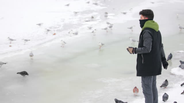 vídeos de stock e filmes b-roll de feeding birds on frozen river - gelo picado