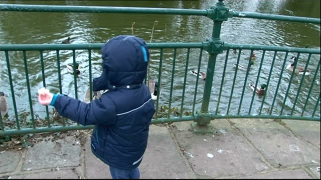 london victoria park ext young boy feeding ducks and geese older woman feeding ducks and geese - victoria park london stock videos & royalty-free footage