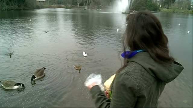 feeding bread to ducks people feeding ducks ducks and geese on lake feeding chantal dave feeding ducks and geese chantal dave interview sot geese on... - duck stock videos & royalty-free footage