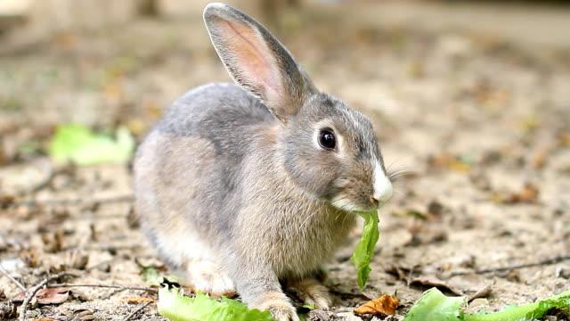 feeding bunny. - rabbit animal stock videos and b-roll footage