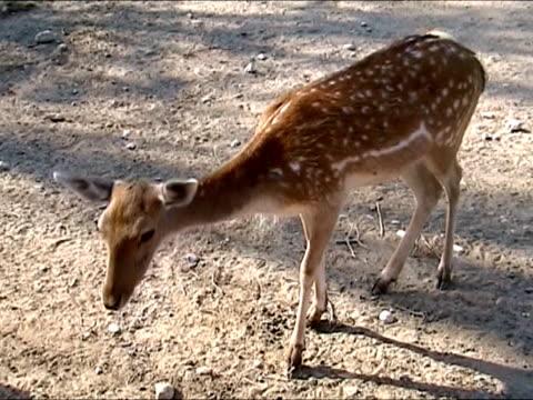 füttern hirsche in gefangenschaft aufgezogen - tier in gefangenschaft stock-videos und b-roll-filmmaterial