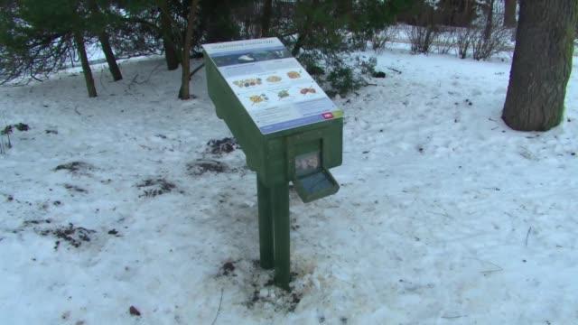 vídeos y material grabado en eventos de stock de feeding ducks in winter - baño para pájaros