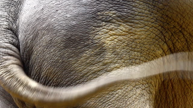 feeding elephant activity in open safari. locate in thailand - tail stock videos & royalty-free footage