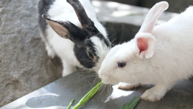 feeding rabbits with morning glory - morning glory stock videos & royalty-free footage