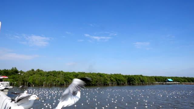 vídeos y material grabado en eventos de stock de alimentación seagul - gaviota