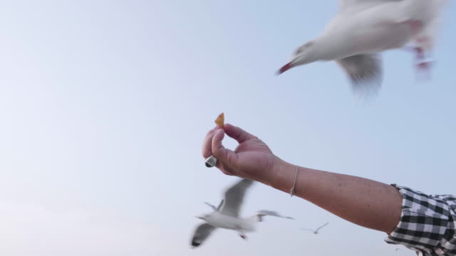 feeding seagull by hand - feeding stock videos & royalty-free footage