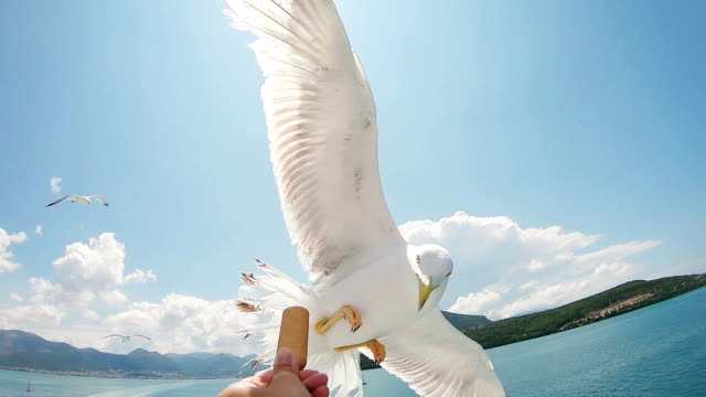 feeding seagulls in flight - flapping wings stock videos & royalty-free footage