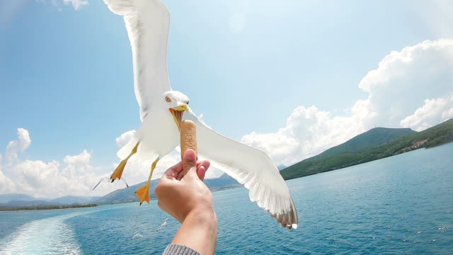 vídeos de stock e filmes b-roll de feeding seagulls in flight - greece