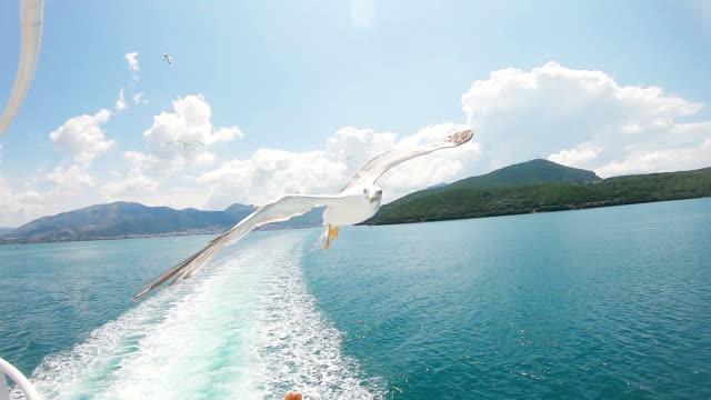 Feeding seagulls in flight