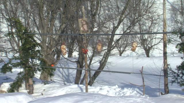 vídeos de stock, filmes e b-roll de feeding site for birds - pet equipment