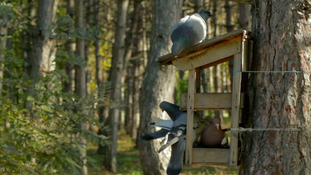 stockvideo's en b-roll-footage met feeding the birds - te klein