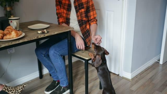 den hund füttern - vase stock-videos und b-roll-filmmaterial