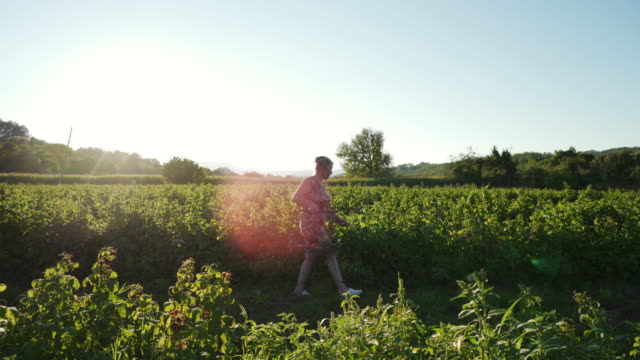 i feel overjoyed as i walk through the field and see how much our raspberries have grown - brambleberry stock videos & royalty-free footage